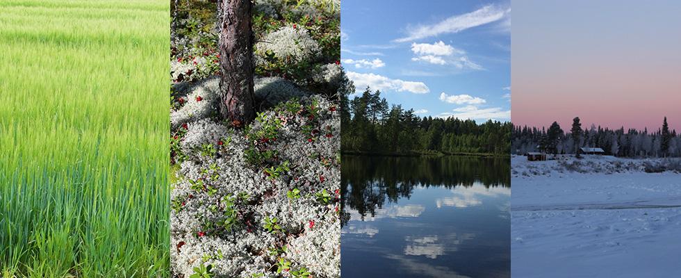 浦佐和子 Sawako Ura フィンランドの美しい自然