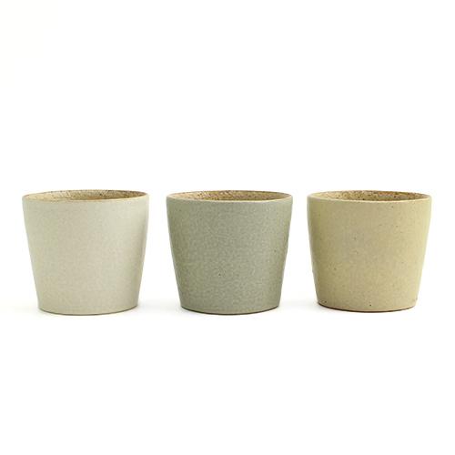フリーカップS