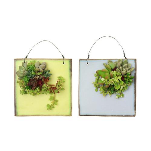 季色 TOKIIRO/【直送】季節の多肉植物のタブロー スクエア(2色)